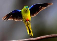 aaa-parrot_20111103104134124988-420x0.jpg